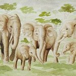 Elephants-closeup-Copyright-Mabel-Cheung-Harris