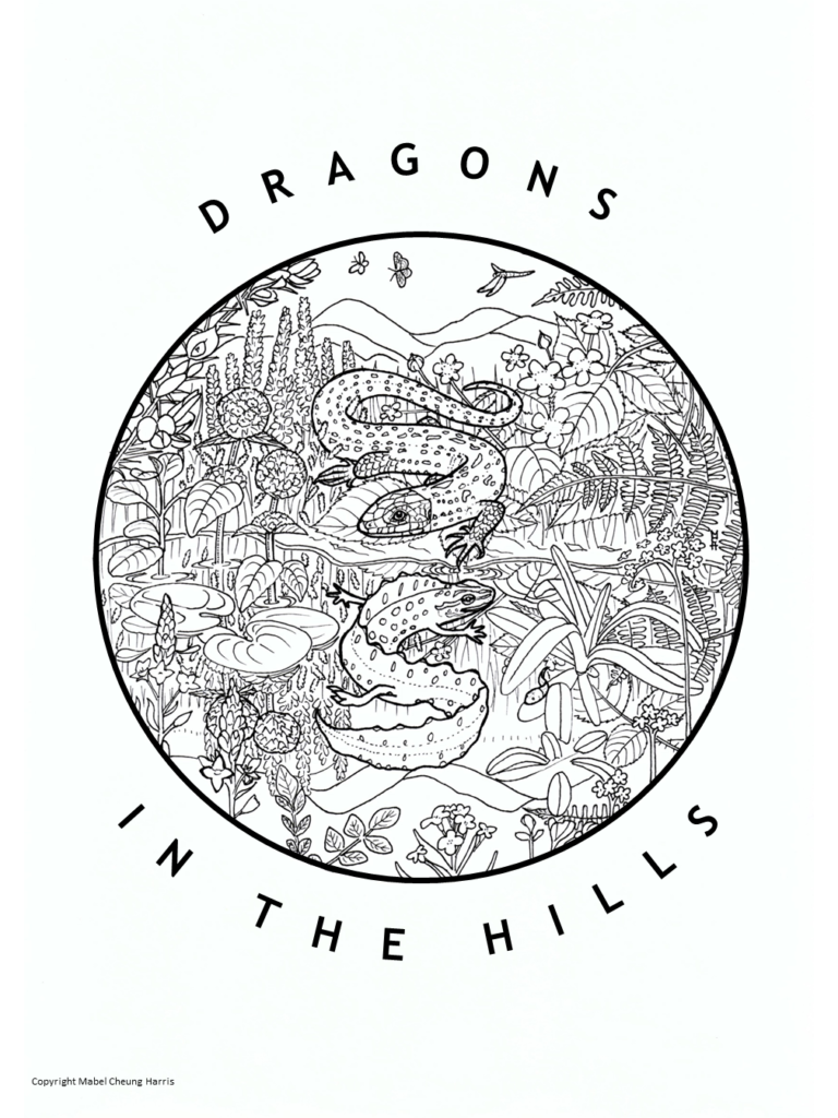 Dragon in the Hills Colouring Sheet Copyright Mabel Cheung Harris.  Black and white line drawing of common lizard, smooth newt and common frog tadpole with a pool, hills and wildflowers all around.
